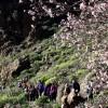 120 senderistas disfrutan de la ruta de tapas y el Almendro en Flor en Tunte