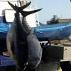 Una orden del Ministerio podría dejar sin pescado fresco a Gran Canaria