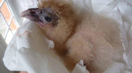 Las aves de Canarias, un precioso recurso poco valorado