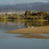 La Charca, Reserva Natural de las Dunas de Maspalomas