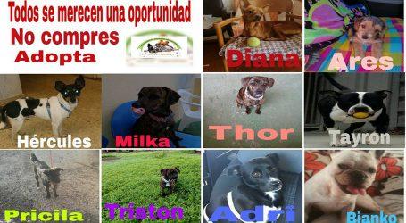 Tibicena no podrá seguir ayudando a más animales abandonados por deuda económica