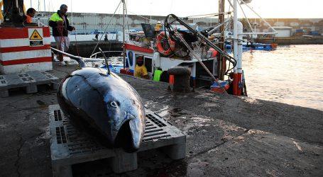 El Cabildo de Gran Canaria pedirá que se aumente la cuota de captura del atún rojo
