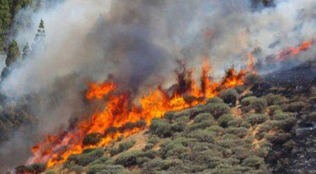 El Cabildo declara la alerta por riesgo de incendios forestales en Gran Canaria a partir del miércoles